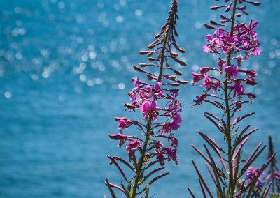 PEI-Flowers
