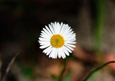 tiny-flower-1-12x12-upsized